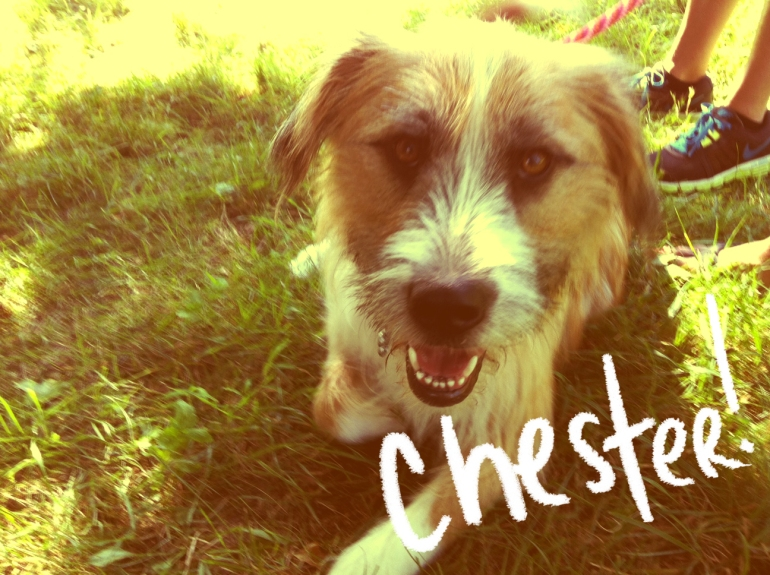 blue-buffalo-shoot-chester-dog