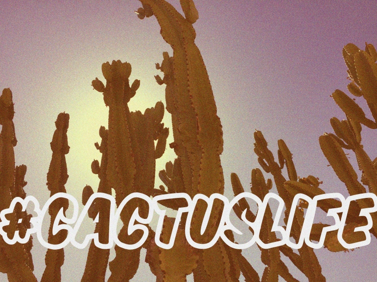 cactus-getty-los-angeles