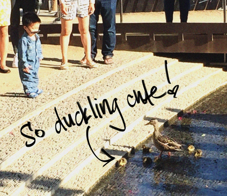 getty-ducklings-los-angeles